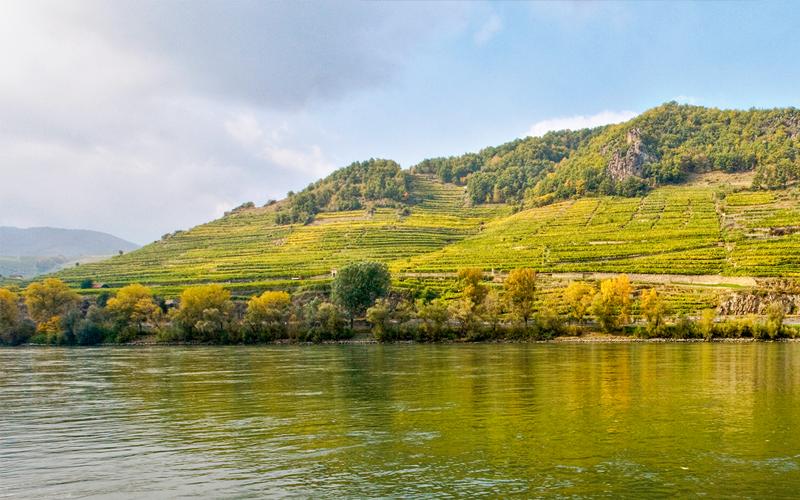Wachau mit Weinberg und Donau